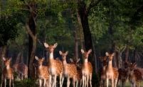 Herten Sunderbans Bangladesh