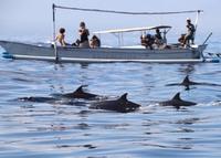 Dolfijnen Lovina Beach Indonesië