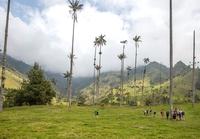 Cocora palmen Colombia