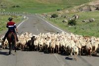 Schapen weg Armenië