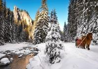 Natuur Zakopane winter Polen