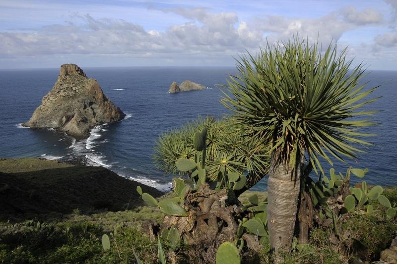 Palmboom met uitzicht over de Atlantische Oceaan