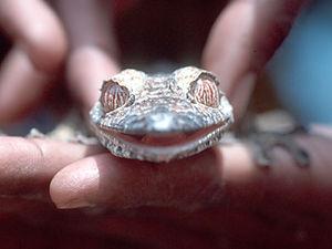 Introductie – gekko