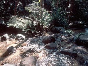 Perinet - oerwoud
