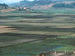 Uitzicht rijstterrassen