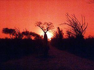 Ifaty – zonsondergang met baobabs