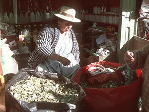 Potosi - verkoop van cocabladeren.