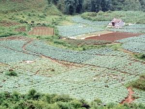 Dalat - koffie- en theeplantages