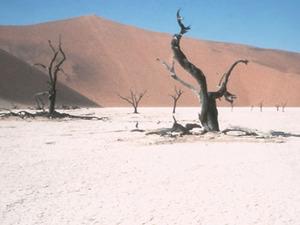 Namib Naukluft - Deadvlei