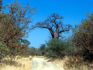 Chipata – South Luangwa –onverharde weg