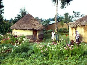 Kikuyuland - huisjes
