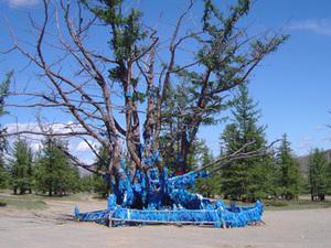Heilige boom bij Ondor Ulaan