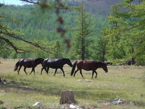 Onderweg - wilde paarden