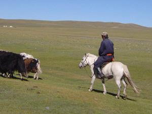 Onderweg - herder met vee