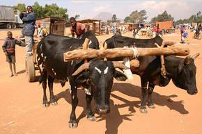 Rondreis Zuid-Afrika & Swaziland, 29 dagen