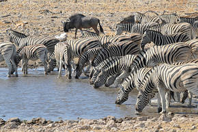 Rondreis Zuid-Afrika, Botswana, Namibië & Victoriawatervallen, 24 dagen kampeerreis