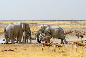 Rondreis Namibië, Botswana & Victoriawatervallen, 20 dagen hotel/lodge of kampeerreis