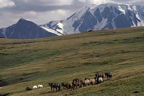 Rondreis Mongolië, 18 dagen kampeer/gerreis