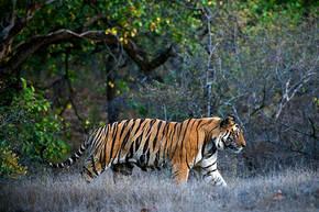 Safarireis India, 18 dagen