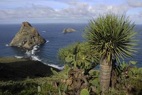 Rondreis Lanzarote & Tenerife, 8 dagen