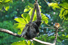 Rondreis Costa Rica, 14 dagen