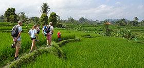 Indonesië, 15 dagen