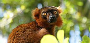 Madagascar & Mauritius, 22 dagen