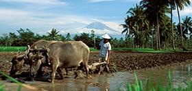 Sumatra, Java & Bali, 23 dagen