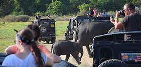 Sri Lanka, 15 dagen