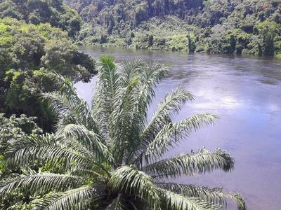 Suriname, 20 dgn
