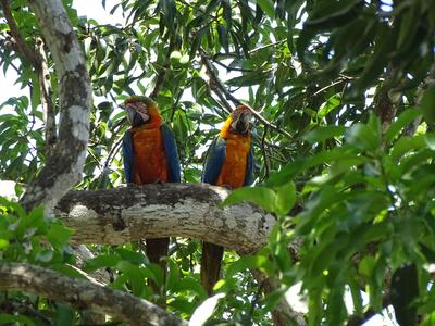 Costa Rica, 21 dagen februari - maart