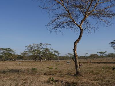 Rondreis Kenia, Tanzania en Zanzibar 18 jan-7 feb