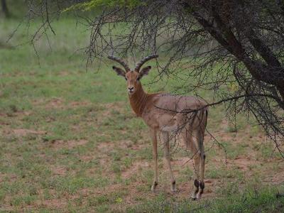 Zuid-Afrika nationale parken, 18 dgn - deel 1