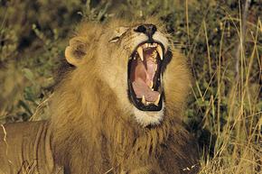 Rondreis Kenia, 16 dagen kampeerreis