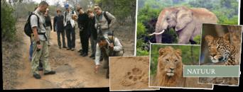 Rangercursus Zuid-Afrika