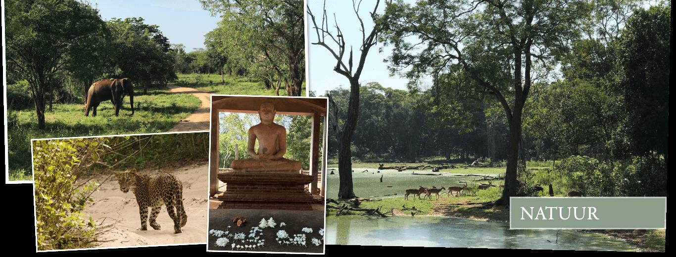 Safarireis Sri Lanka