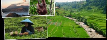 Bekijk de Rondreis Sumatra, Java, Bali & Lombok, 28 dagen van Djoser