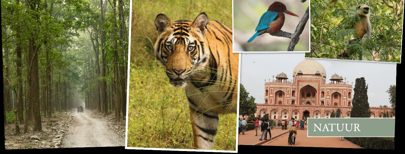 Safarireis India