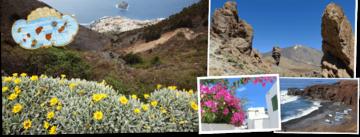 Bekijk de Rondreis Lanzarote & Tenerife, 8 dagen van Djoser