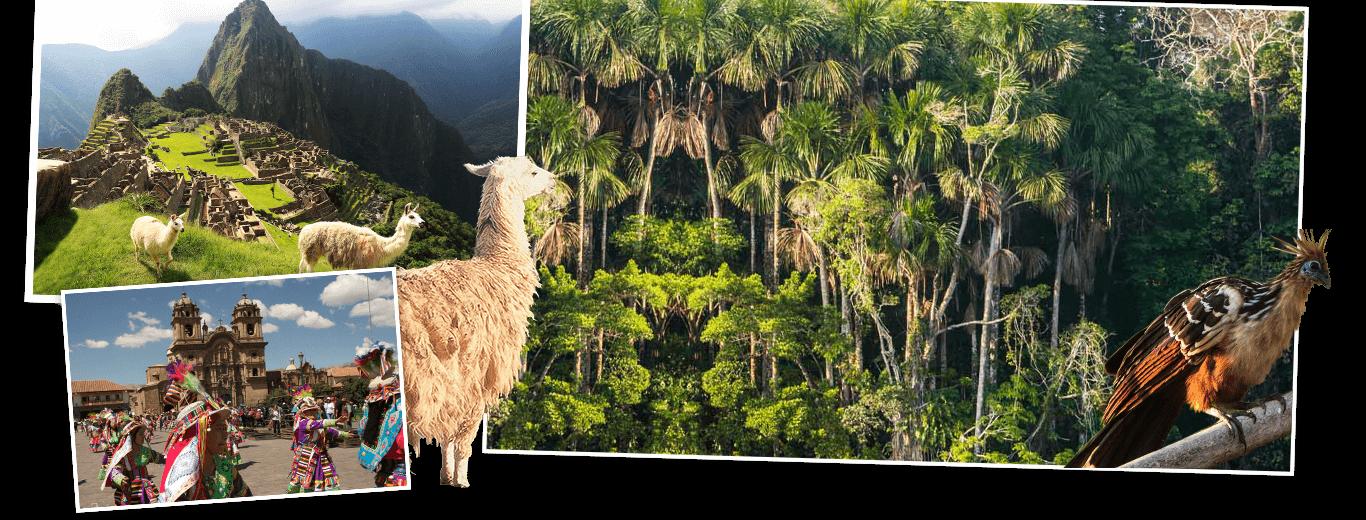 Peru met Amazone